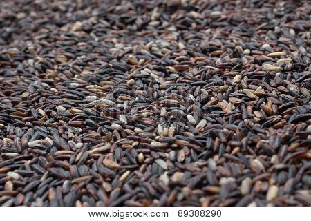 Red Rice Grains