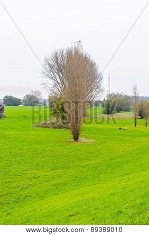 Meadow Landscape,