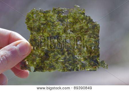 Seaweed Chip