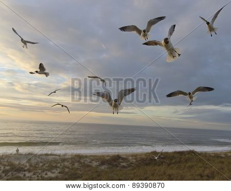 Sunset Flight Of Seagulls
