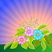 stock photo of cosmos flowers  - Flower vector background - JPG