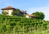 picture of farm landscape  - Summer landscape in Monferrato  - JPG