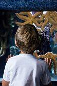 foto of starfish  - Young man looking at big starfish behind the camera at the aquarium - JPG