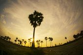 stock photo of tourist-spot  - Colorful sunset or sunrise landscape with silhouettes of palm trees on Chau Doc city - JPG