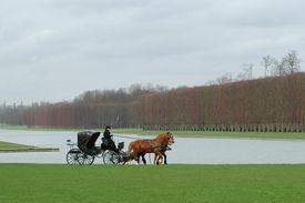 stock photo of carriage horse  - versailles royal palace park - JPG