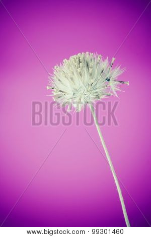 Beautiful White Grass Flower