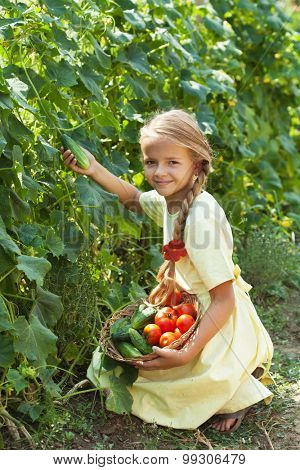 Happy young girl picking cucumbers in the summer garden - holding a basket with fresh produce