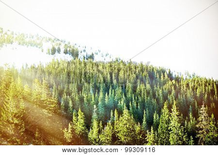 Beautiful view of Carpathian Mountains in wintertime with sunlight