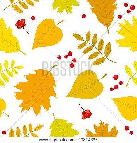 Autumn forest seamless pattern with rowan berries, oak, rowan, lilac leaves. Vector set. White backg