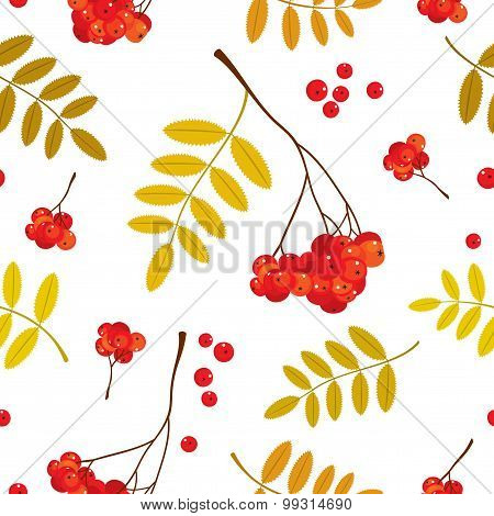 Autumn seamless pattern with red and orange Rowan berries and leaves. Vector illustration. White bac
