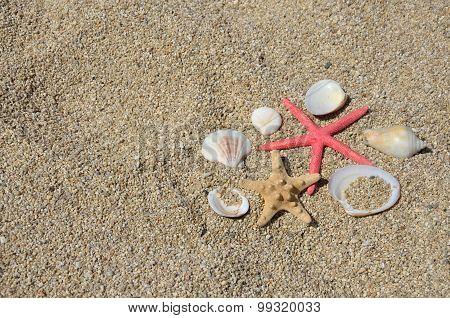 Seastars And Shells