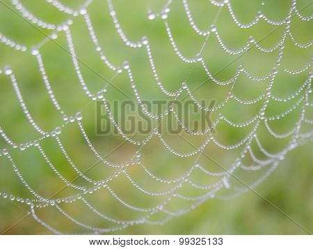 Spider web detail with dew drops