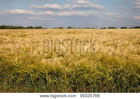 Germany, North Rhine-westphalia, Grain Field, Barley Field