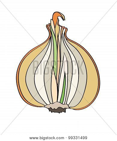 onions isolated illustration on white background