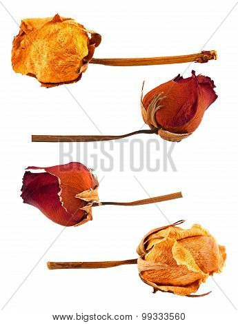 Set Of Dried Roses