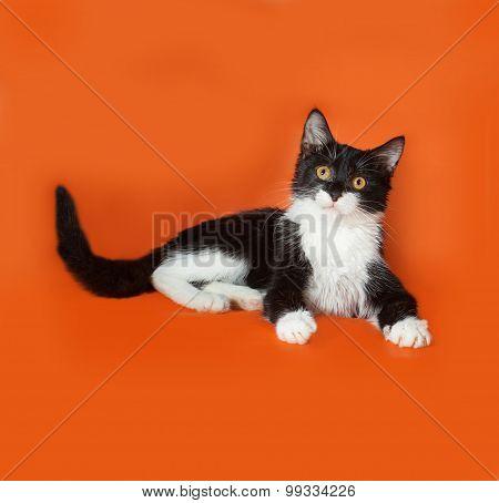 Black And White Kitten Lies On Orange