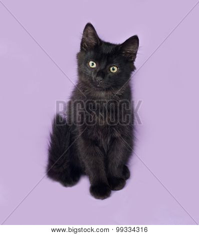 Black Fluffy Kitten Sits On Lilac