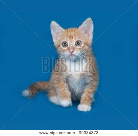 Red And White Kitten Sitting On Blue