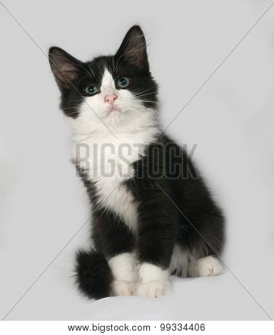 Black And White Fluffy Kitten Sits On Gray