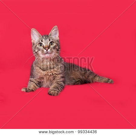 Striped Kitten Lies On Red