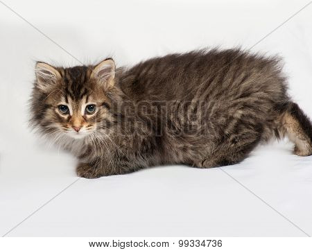 Fluffy Siberian Striped Kitten Lies On Gray