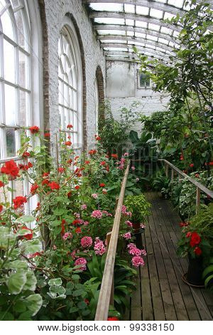 Old conservatory with plants