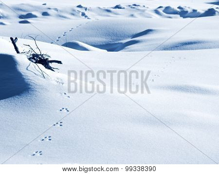 Traces Of Rabbit In The Snow