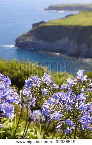 Azores Landscape With Hydrangeas And Coastline In Sao Miguel Island