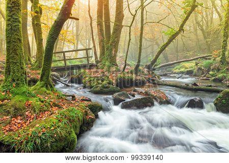 Autumn On Bodmin Moor