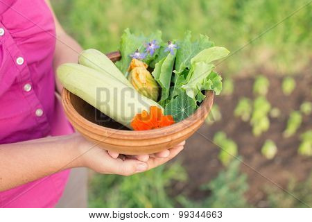 Bowl Of Freshly Picked Vegetables In Gardener's Hands