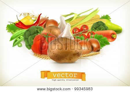 Harvest juicy and ripe vegetables vector illustration, isolated on white