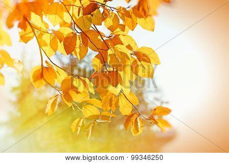 Autumn leaves - beautiful nature