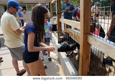 Girl Feeds Goats