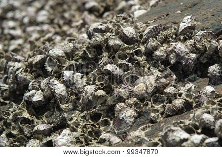 Cluster Shells