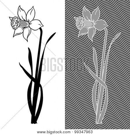 Hand-drawing stylized illustration of narcissus flower.  Vector format EPS 8, CMYK.