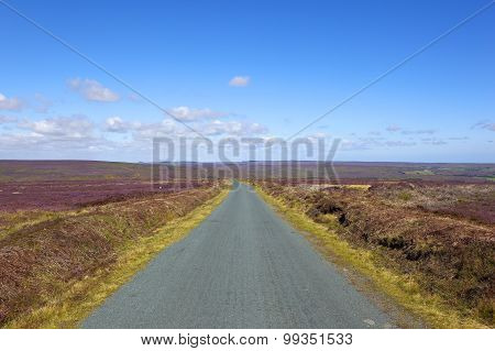 Rural Road Through Flowering Heather