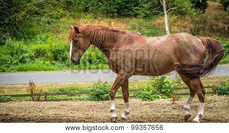 A Bay Horse In An Outdoor Corral