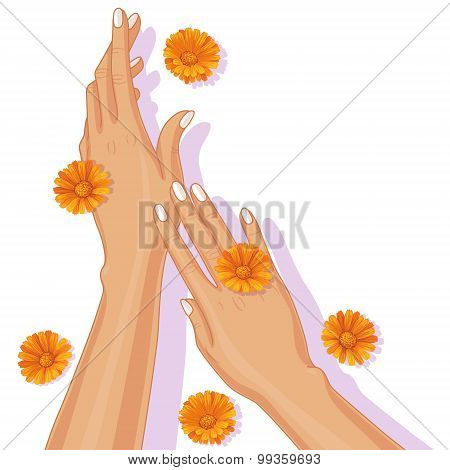 Female Hands And Calendula Flowers