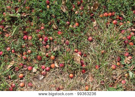 Wild Berries, Green Grass, Dry Leaves. Natural Background