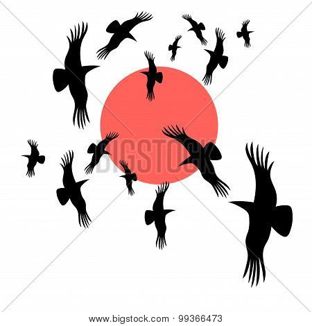 Black Crows Circling In The Sun