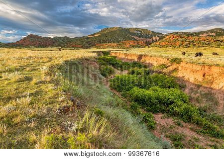 Red Mountain Open Space in northern Colorado near Fort Collins, summer scenery at sunset with cattle