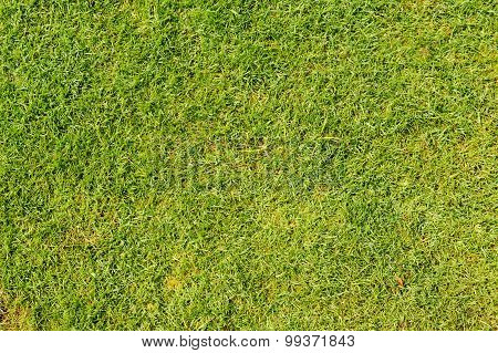 Lawn Grass In Football Field