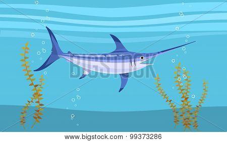Swordfish underwater