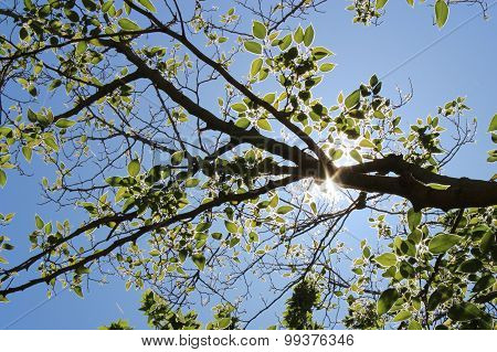 Branch with leafs in sunlight
