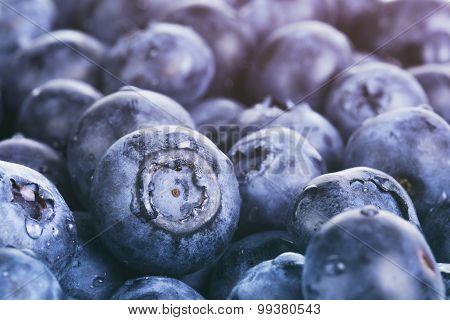 wet ripe blueberries for background