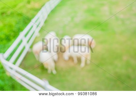 Image Of Blur Herd Of Sheep On Green Field