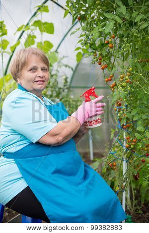 Pensioner woman planting in hothouse