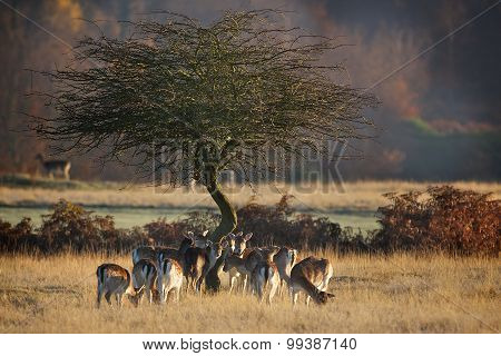 meeting tree
