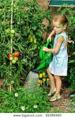 Cute Little Girl Watering Tomato And Flowers In The Backyard