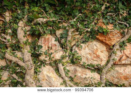 Green moss on tree trunk